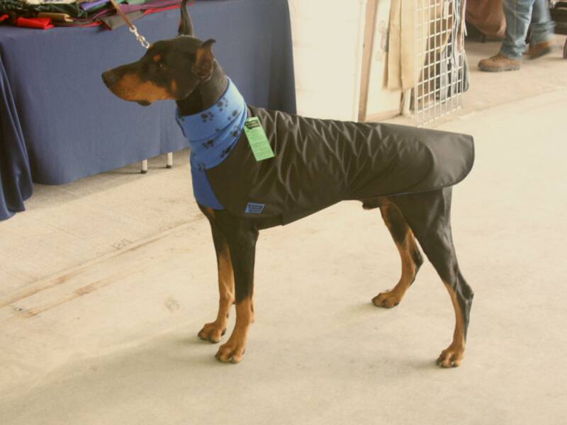 Doberman Great Dane Mix Great dane - size large - warm